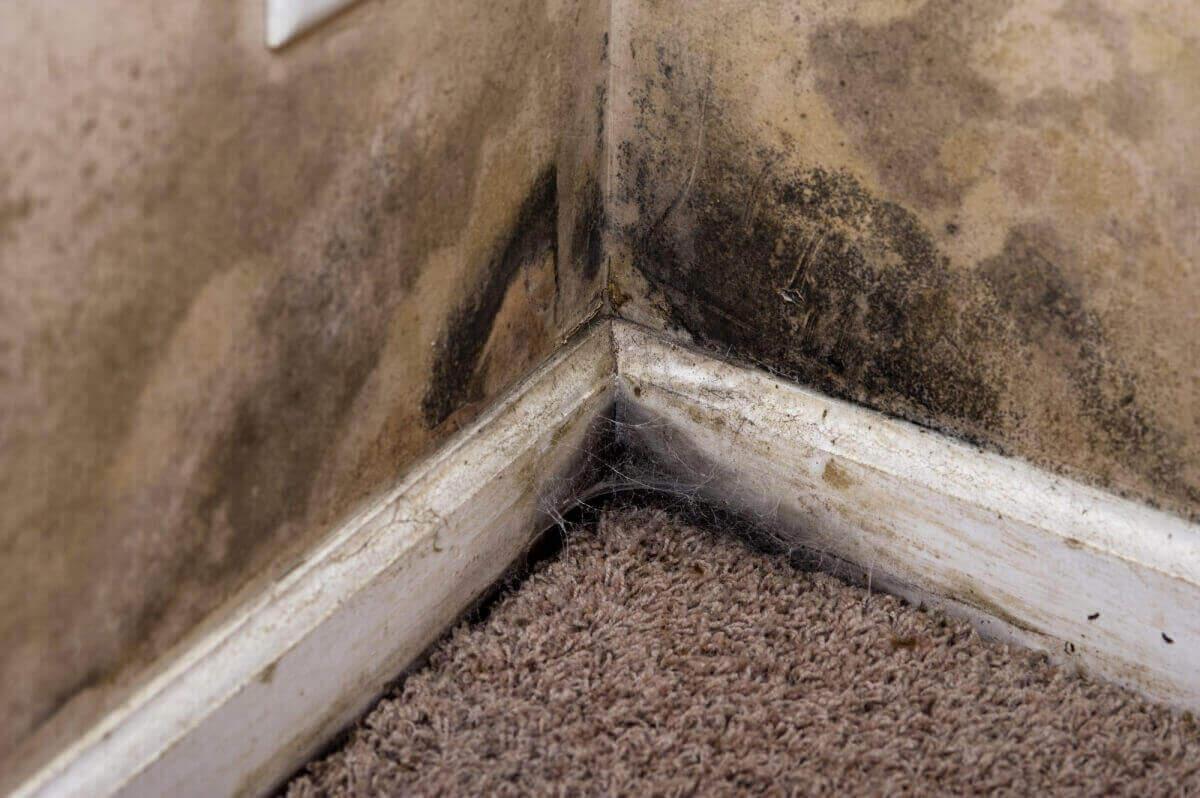 schimmelpeter mit uns gegen feuchte w nde und nasse keller home. Black Bedroom Furniture Sets. Home Design Ideas