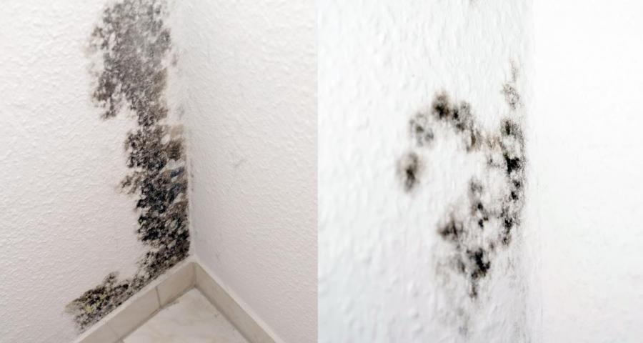 SchimmelPeter - Mit uns gegen feuchte Wände und nasse Keller ...