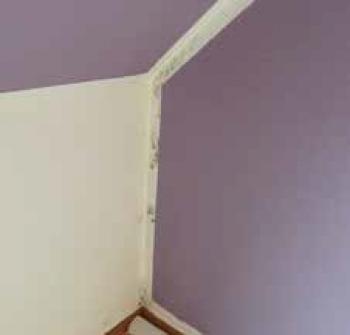 schimmelpeter mit uns gegen feuchte w nde und nasse. Black Bedroom Furniture Sets. Home Design Ideas