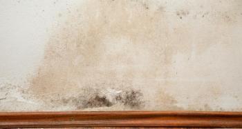 SchimmelPeter - Mit uns gegen feuchte Wände und nasse Keller - Wie ...